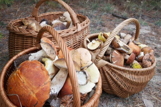 Фото В Кировской области удалось найти заблудившихся в лесу пенсионеров