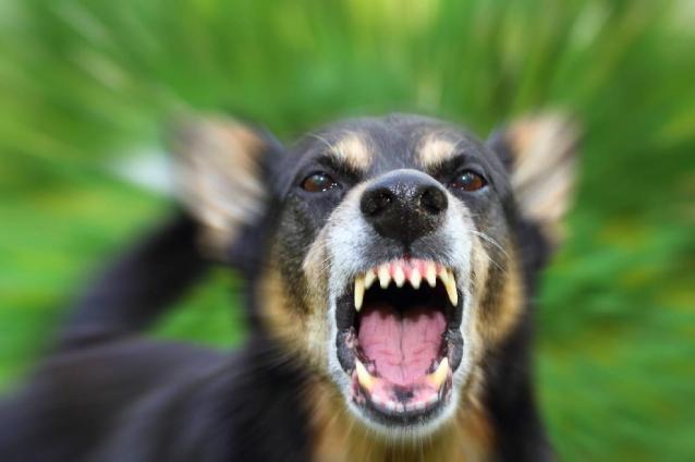 Фото Прокуратура через суд обязала мэрию Сосногорска выплатить 300 тыс рублей девочке, пострадавшей от укуса собаки
