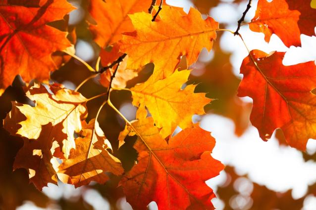 Фото В Кировской области ожидается сухой и тёплый октябрь