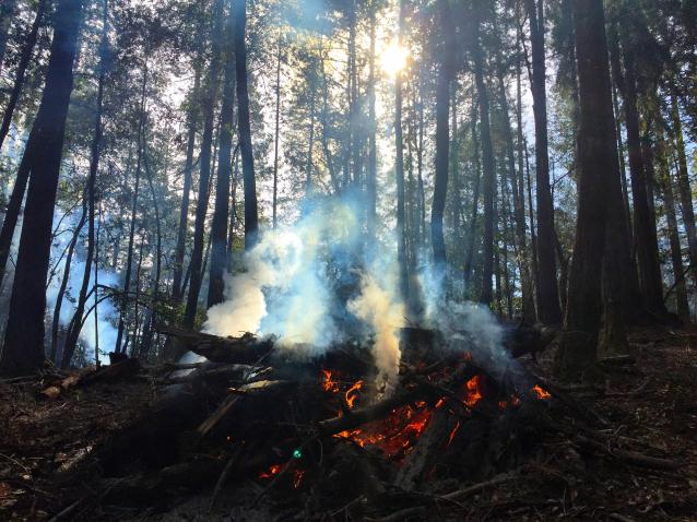 Фото В Кировской области бушует четыре лесных пожара