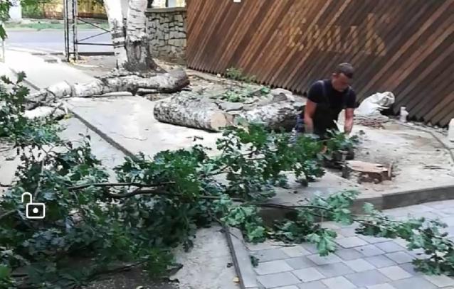 Фото В администрации Кирова прокомментировали вырубку дубов и берёз в центре города