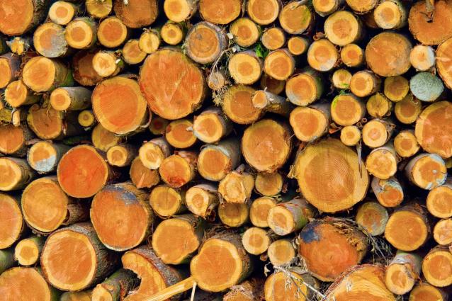 Фото В Омутнинском районе по вине вальщика леса погиб рабочий