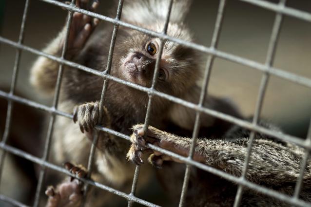Фото В Кирове на выставке-зоопарке животных содержали с нарушениями