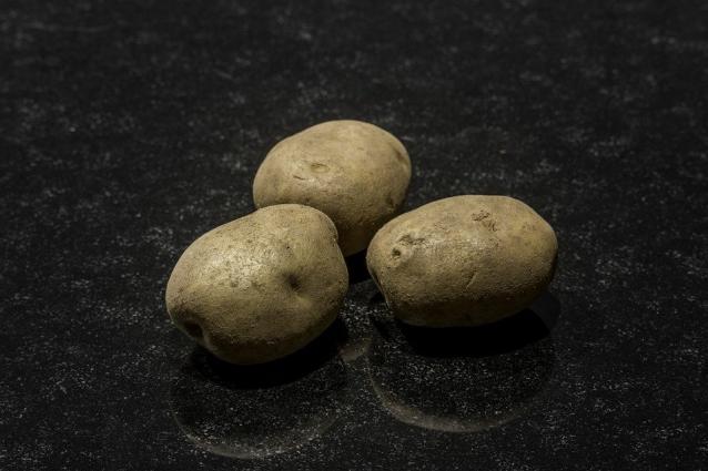 Фото В Сыктывдине у картофеля выявили вредоносное заболевание «резиновая гниль»
