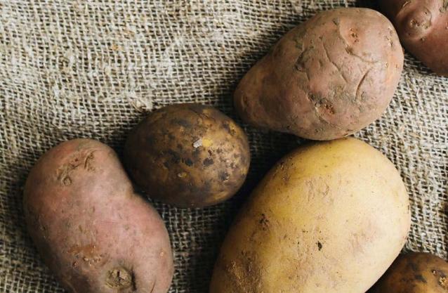 Фото Россельхознадзор отменил карантин по картофельной нематоде в Коми