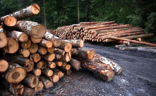 Фото В Кировской области мужчина незаконно нарубил лес на 15,5 млн рублей