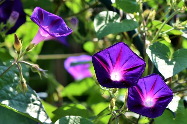 Фото В октябре «Горзеленхоз» Ухты закупит семена цветов на 1 млн рублей