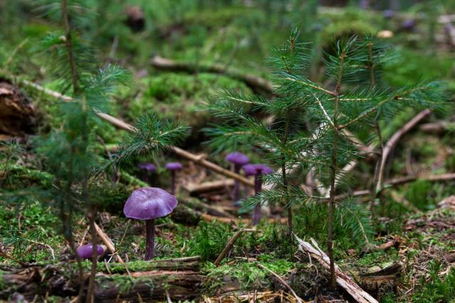 Фото В Коми трое пенсионеров заблудились в лесу