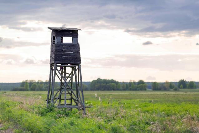 Фото В Кировской области с 1 октября открывается охота на ондатру, бобра и выдру