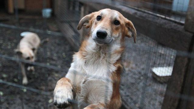 Фото В Кировской области выявлены нарушения в сфере отлова бездомных животных