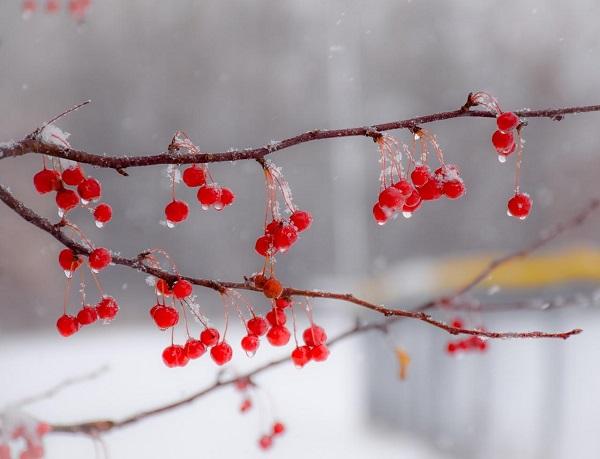 Фото В выходные в Кирове ожидается дождь с мокрым снегом