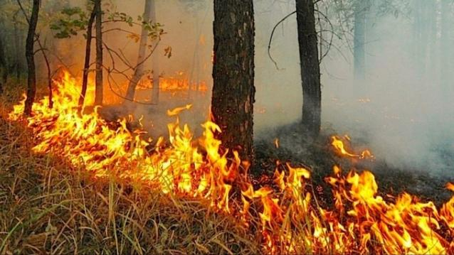 Фото В Котельничском районе тушат лесной пожар