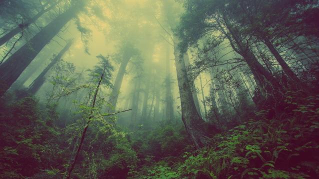 Фото В Коми двоих удалось спасти из леса, при помощи мобильной связи