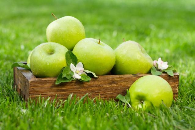 Фото На кировской базе нашли 169 кг запрещенных к реализации яблок