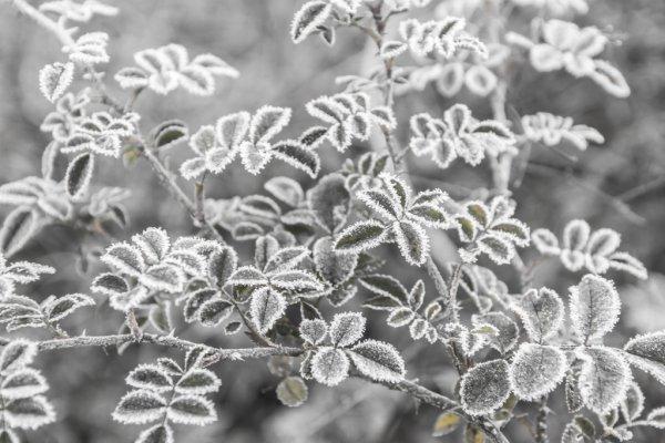 Фото В последние дни лета в Коми ожидаются заморозки